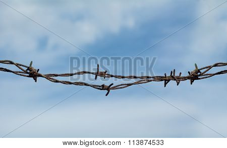 Barb Wire Detail
