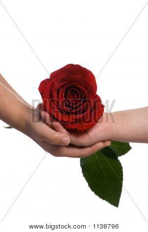 gemeinsame Nutzung einer rose 2