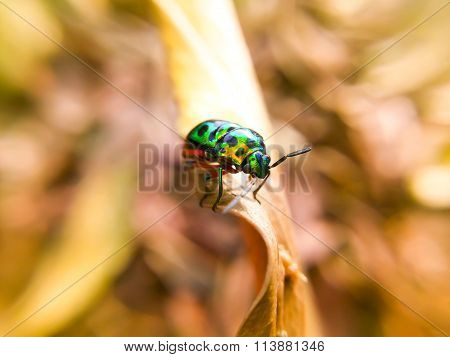 Ladybug On Leaves Dry Background