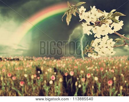 Cherry Flowers And Thunderstorm Vintage