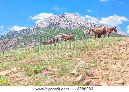 herd of horses in the wild