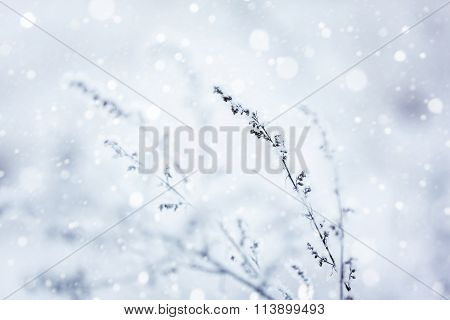 Winter Nature Background.winter Landscape.winter Scene .frozen.