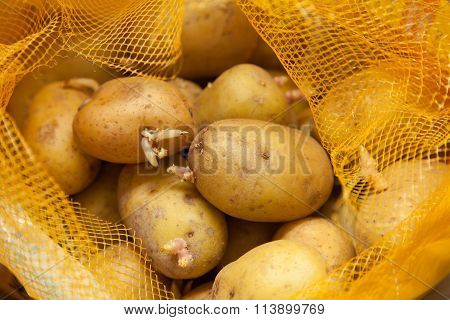 Potatoes With Sprout In A Sack