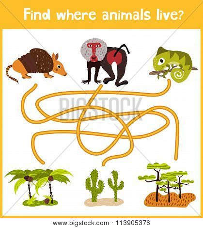 Fun And Colorful Puzzle Game For Children's Development Find Where The Armadillo, The Baboon And