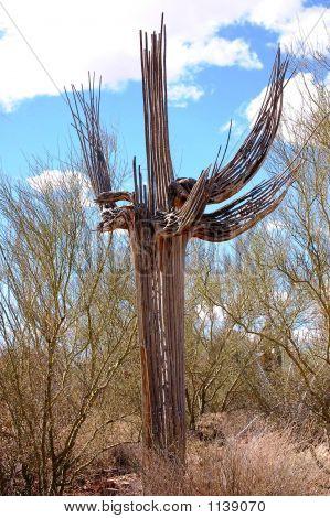 2006 Tucson Arizona 196