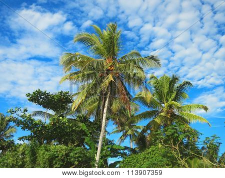 Green palm trees on blue sky background