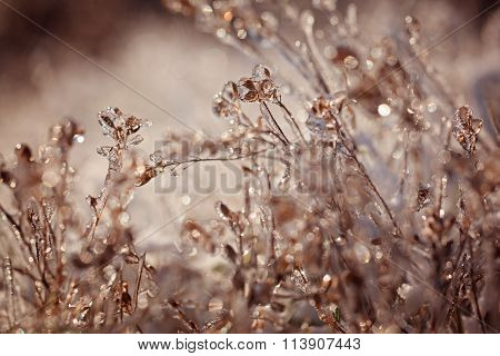 Frozen Plant. Frozen Winter Landscape -  Nature Background.