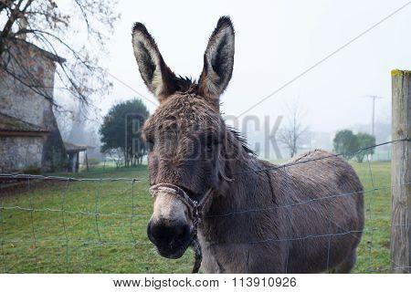 Cute Brown Donkey At Farm