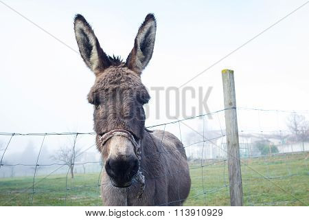 Cute Brown Donkey At Farm