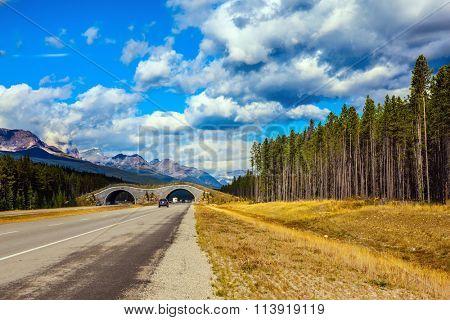 Jasper National Park, Canadian Rocky Mountains. Bridge to go wild animals across the highway