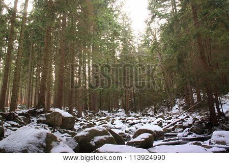 Winter River In The Polish Forest. Mountain Rocks Covered With Snow