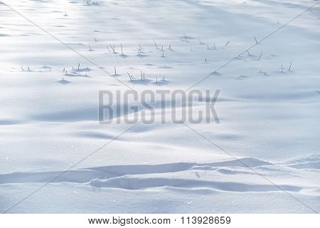 Grass Sticking Out Of The Snow
