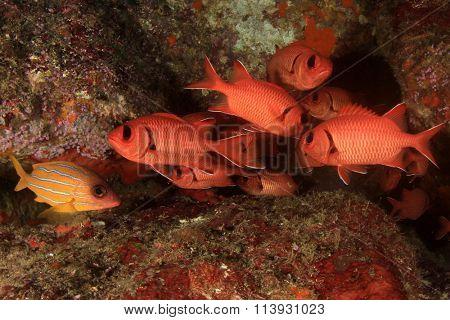 Coral reef fish underwater in sea ocean