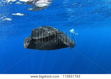 Plastic rubbish bags pollution in ocean environmental problem