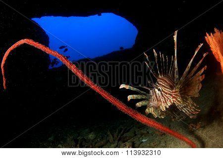 Lionfish underwater cave