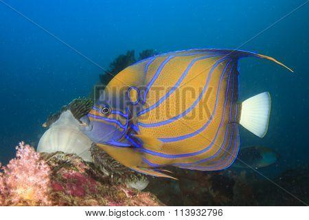 Angelfish Clownfish Nemo fish