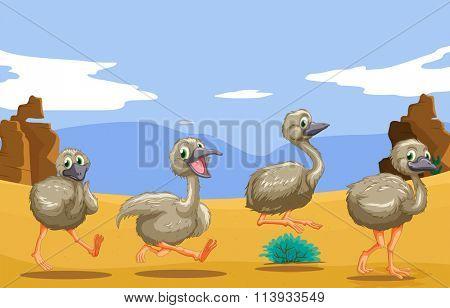 Little ostriches running in the desert illustration