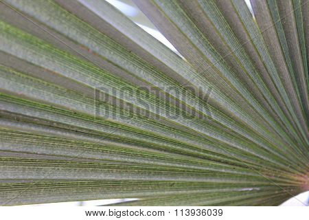 Palm green leaf close-up