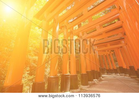 Thousands of Torii with green trees background, Fushimi Inari Taisha Shrine, Kyoto, Japan.