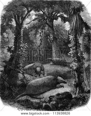The Priodonte giant armadillo and large forest, vintage engraved illustration. Magasin Pittoresque 1880.