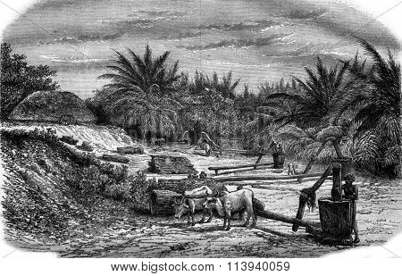 Production of oil in India, vintage engraved illustration. Magasin Pittoresque 1876.