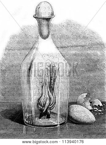 An egg in a carafe, vintage engraved illustration. Magasin Pittoresque 1873.