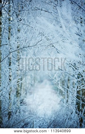 Winter Nature Background. Winter Landscape. Copy Space.