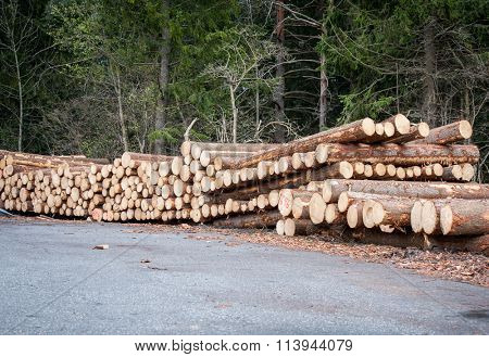 Woodpile in the forest to dry for use as firewood