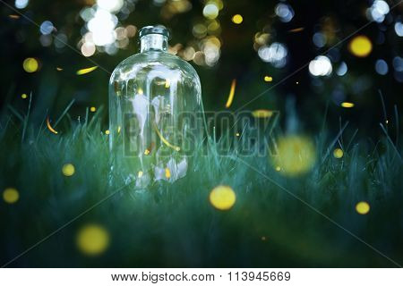 Fireflies in a jar. Long exposure of fireflies in a backyard.