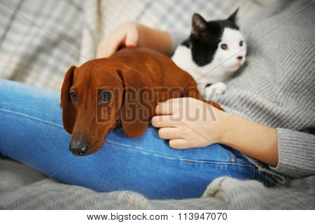Woman with cute dachshund puppy and cat on plaid background