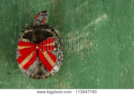 Turtle with red bow on green background, close up