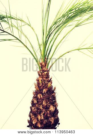 Palm plant in a brown pot