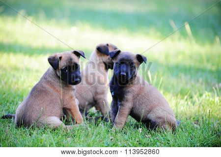 Young Puppies