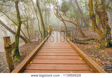 Foggy laurisilva forest in Anaga mountains Tenerife Canary island Spain.