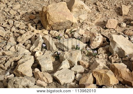 stones and flowers Negev