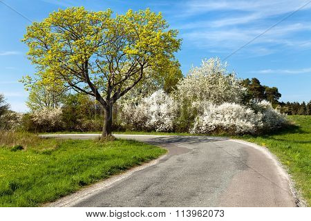 Springtime View, Road And Flowering Trees