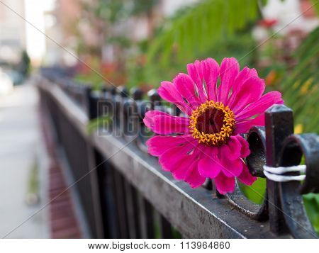 Pink flower protruding through black fence.
