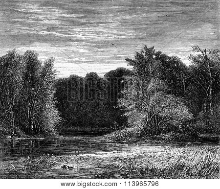 A forest on the edge of Lehigh, Pennsylvania, vintage engraved illustration. Magasin Pittoresque 1869.