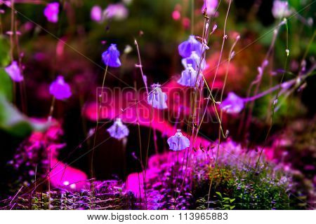 Background Of Exotic Flowering Plant Blue Flowers