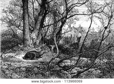 Deer, vintage engraved illustration. Magasin Pittoresque 1869.