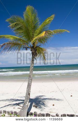 Palm Tree On Paradise