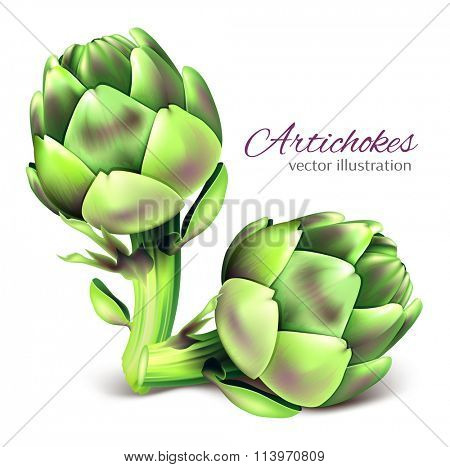 Artichoke. Vector illustration.Fully editable handmade mesh.