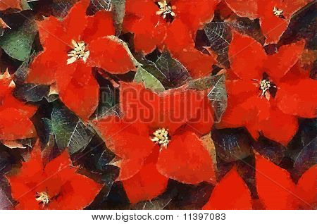 Poinsettia Flowers (Pastels-Vector)