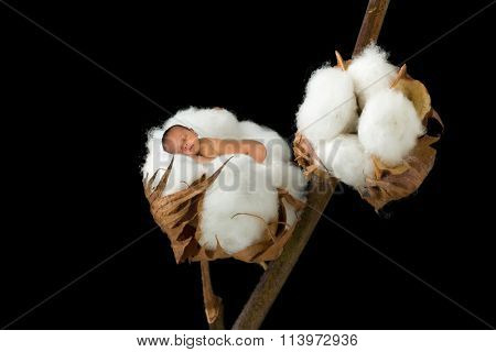 Little sleeping newborn baby photoshopped into a soft cotton ball