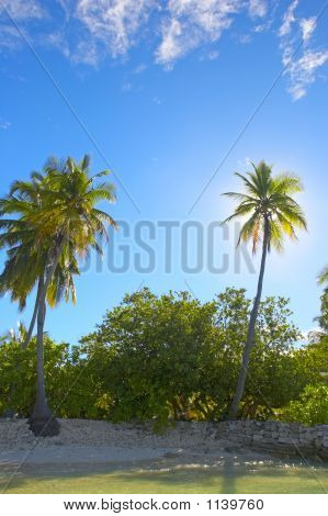 Pleasant Palmtrees On The Coast Of Indian Ocean