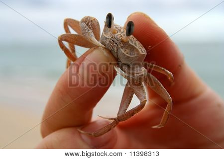 Crab in human hand