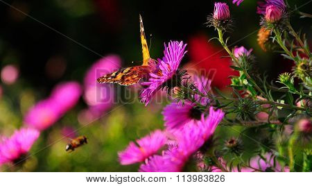 The Butterfly In Flowers