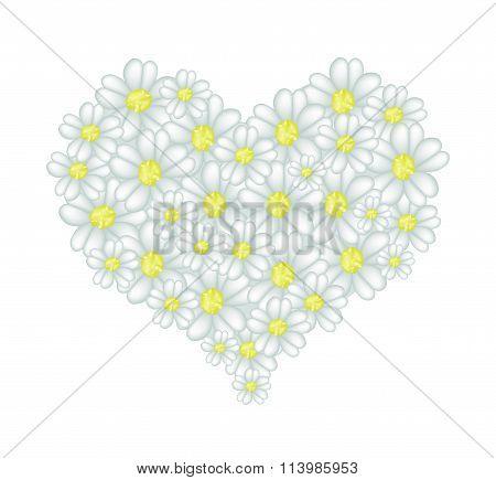 White Yarrow Flowers in A Heart Shape