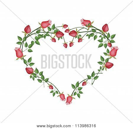 Beautiful Red Roses Flowers in Heart Shape