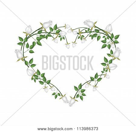 Beautiful White Roses Flowers in Heart Shape